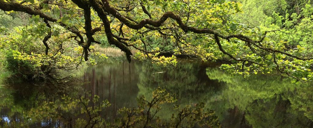 Header-Kachel-Herausragendes-Engagement-Flusslandschaften